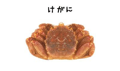 毛ガニの写真イメージ